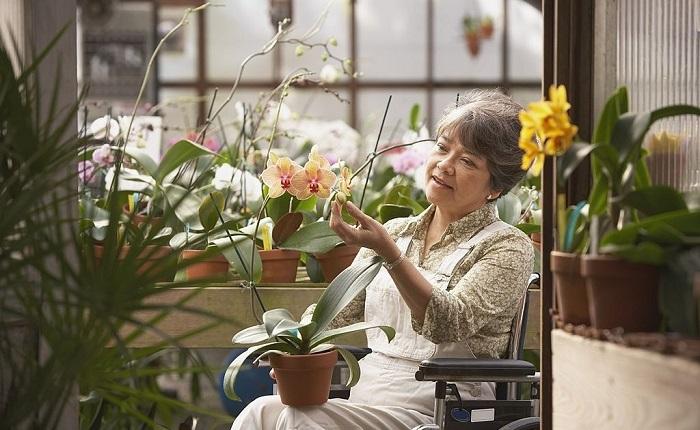 obtener la pensión de invalidez.